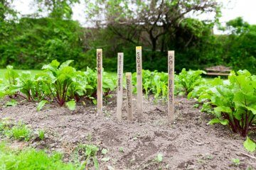 The Best Vegetables to Plant Together for an Unbelievable Harvest
