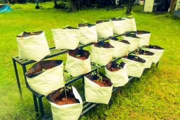 Pros and Cons of Fabric Grow Bags for Vegetables