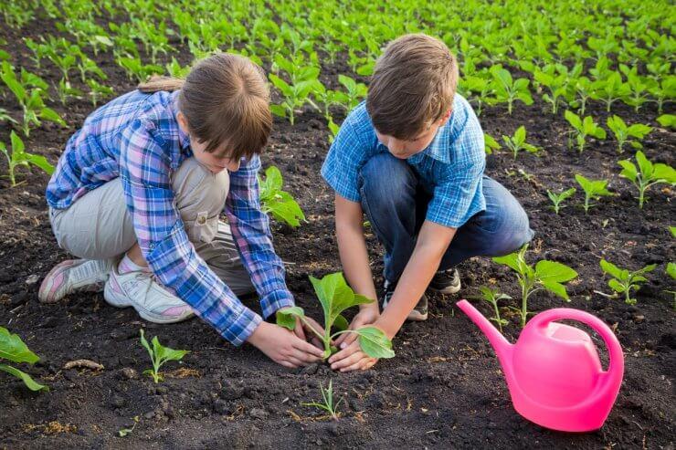 Kid's Vegetable Garden