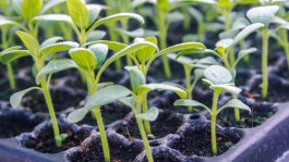 The Easiest Vegetables to Grow from Seeds