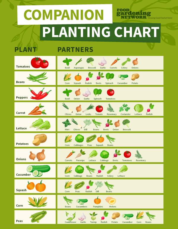 Printable Companion Planting Chart