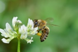 The Best Flowers for a Vegetable Garden to Attract Pollinators and Deter Pests