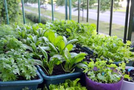 The Easiest Vegetables to Grow on a Balcony