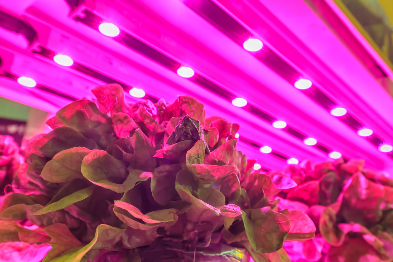 light for growing plants