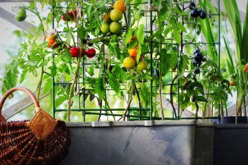 5 Different Types of Vegetable Vines You Can Grow