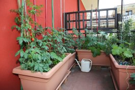 The Challenges of Growing Vegetables in Containers and How to Overcome Them