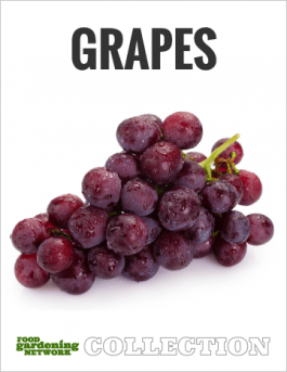 Great Grapes—How to Grow the Popular Fruit Multi-Tasker