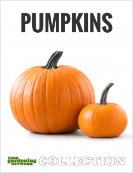 What to Do with Pumpkins After the Harvest