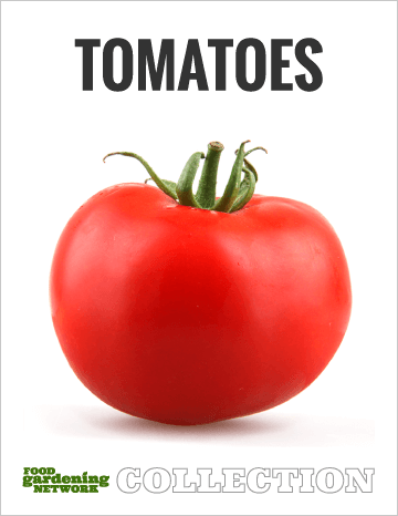 Tomato Collection graphic