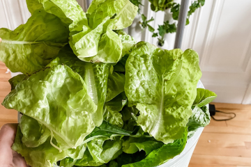 The Best Hydroponic System for Vegetables and Herbs