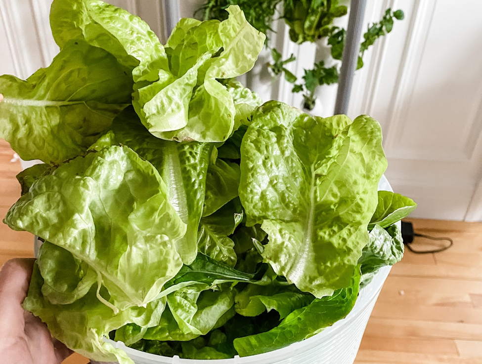 Best Hydroponic Systems for Vegetables
