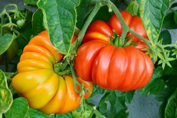 Why You Need to Plant an Heirloom Garden This Year