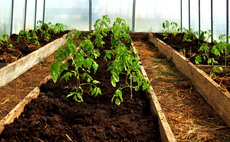 Raised bed gardening in a greenhouse
