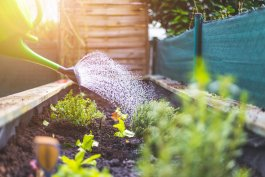 A Small Kitchen Garden Vegetable List