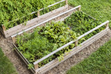 Planting Raised Garden Beds: Spacing & Growing Vegetables and Herbs
