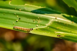 13 Deadly Vegetable Garden Pests