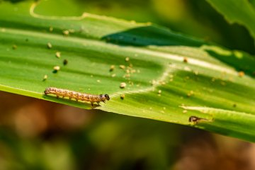 13 Deadly Vegetable Garden Pests