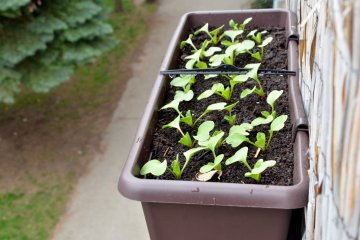 What Can You Grow in Deck Rail Planters?