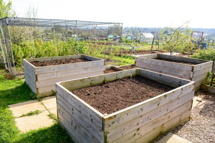 Photo of raised bed gardens