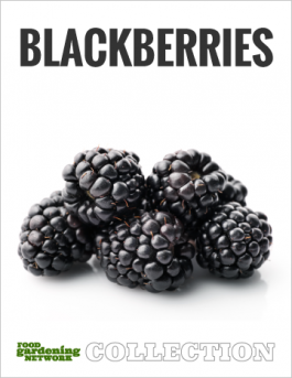 Blackberry Heaven—The All-in-One Guide to Choosing, Growing, Harvesting, and Cooking Blackberries