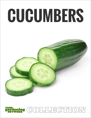 Cucumbers Collection