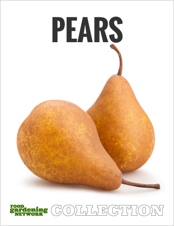 Gardening Network Pears