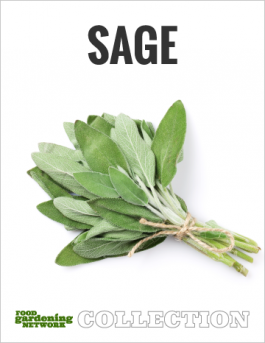 The Ultimate Sage Guide—All You Need to Know About Growing, Harvesting, Cooking, and Healing with Aromatic Sage