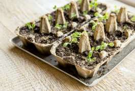 How to Germinate Seeds More Quickly