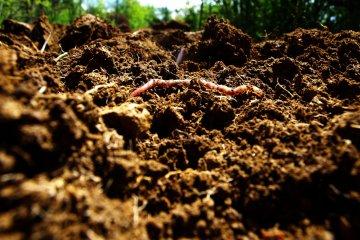 5 Benefits of Worm Castings for Indoor Plants