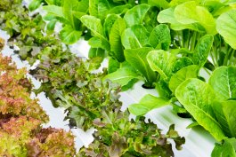 How Closed System Hydroponics Work (and Is It a Good Fit For You?)