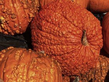 Bumpy Pumpkins