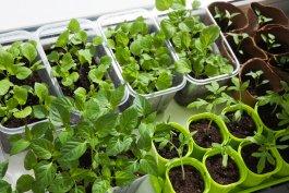 The Best Soil for an Indoor Vegetable Garden