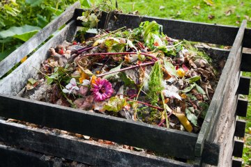 Can Compost Tea Help Vegetable Gardens Thrive?