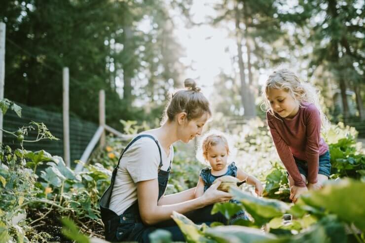 Family Harvesting Vegetables from garden