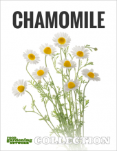 Food Gardening Network Collection - Chamomile