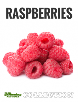 Raspberries Rule! Gardening Guide: All You Need to Know About Growing, Harvesting, Cooking, and Eating Delicious Raspberries