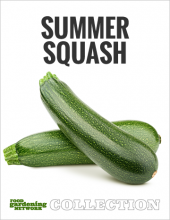 Food Gardening Network Summer Squash