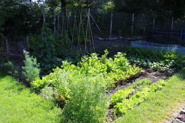 vegetables that require little sun