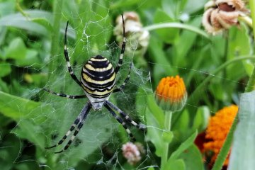 10 Common Garden Bugs That Are Actually Good for Your Plants