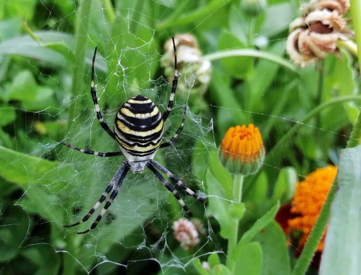 common garden bugs