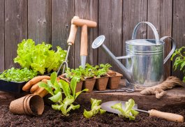 How to Build a Garden Tool Kit on a Budget