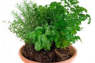 How Often Should You Water Potted Plants to Avoid Root Rot