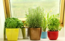 How to Grow a Healthy Countertop Herb Garden from Seed