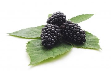 Triple Crown blackberries.