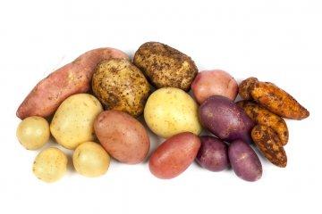 Potato and sweet potato varieties.