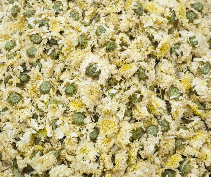 Drying chamomile blossoms.