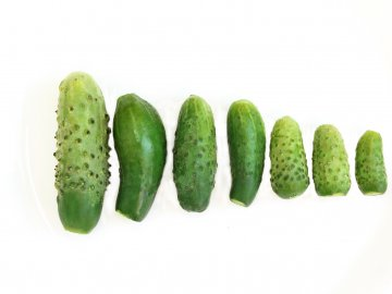 A variety of cucumbers.