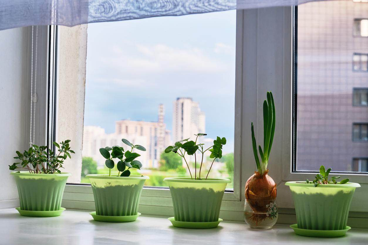 plant windowsill