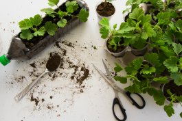 How to Make DIY Plant Containers from Recyclable Materials
