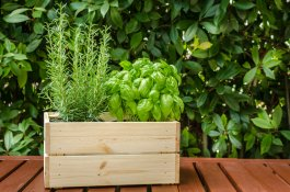 10 Pest Repelling Plants That Keep Bugs Away Naturally